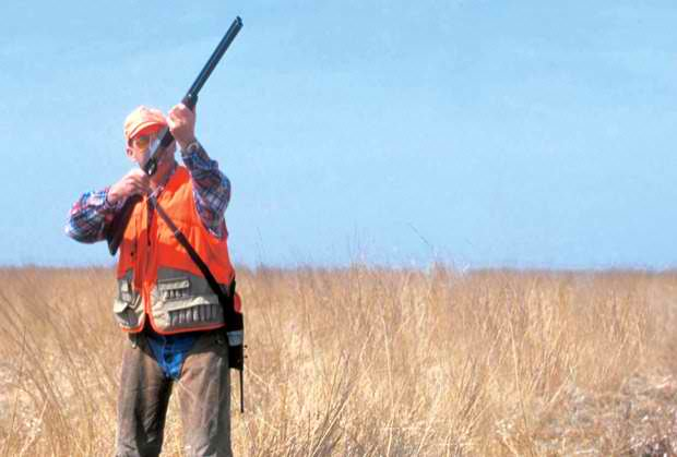 lov na zeca i fazana