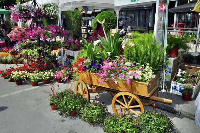 Festival cveća i hortikulture