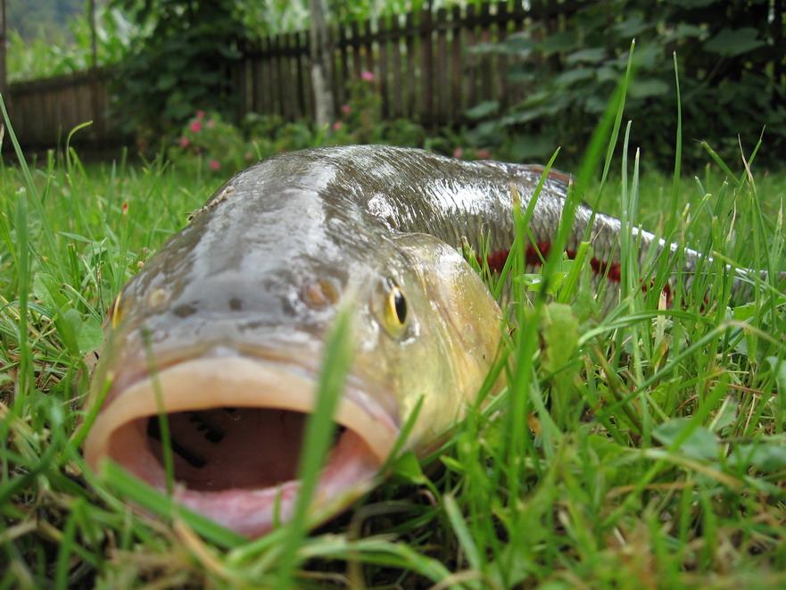 ribolov-u-vrnjackojbanji